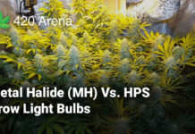Metal Halide (MH) Vs. HPS Grow Light Bulbs
