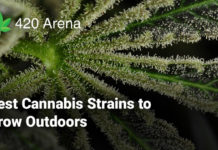 Best Cannabis Strains to Grow Outdoors