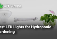 Best LED Lights for Hydroponic Gardening