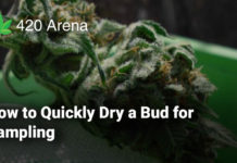 How to Quickly Dry a Bud for Sampling