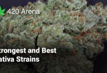 Strongest and Best Sativa Strains