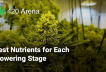 Best Nutrients for Each Flowering Stage